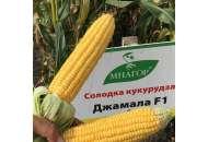 Джамала F1 1 - сахарная кукуруза, Mnagor фото, цена