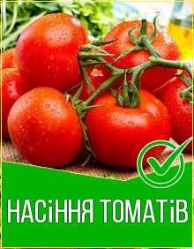 Топ насіння томатiв 2020-2021 рік, фото, ціна