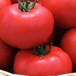 Ягуар F1 - томат индетерминантный, 500 семян, Seminis (Семинис) Голландия фото, цена