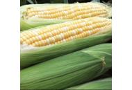 Ракель F1 - кукуруза сахарная, 5000с , Clause Франция фото, цена