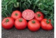 Томск F1- томат детерминантный, 1 000 семян, Bejo (Бейо), Голландия фото, цена