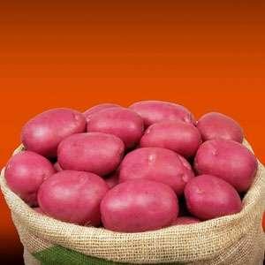 Инфинити - ранний картофель 1 репродукции, ( Гермес) фото, цена