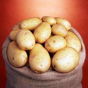 Нектар - ранний картофель 1 репродукции, ( Гермес) фото, цена