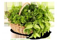 Семена зелени, пряных трав фото, цена