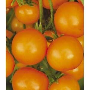 Золотце F1 - томат, 5 гр, детерминантный фото, цена