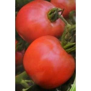 Вано F1 - томат детерминантный фото, цена