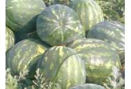 Мисон F1 - арбуз, 1000 семян, Yuksel Tohum фото, цена