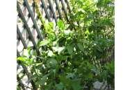 Шпалера для підтримки рослин Треплас 2м х 1м (натуральний) фото, цiна