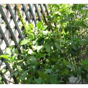 Шпалера для поддержки растений Треплас 2м х 1м (натуральный) фото, цена
