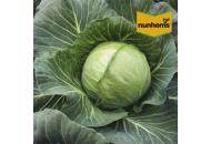 Акварель F1 - капуста белокочанная 2500 семян, Nunhems фото, цена