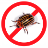 Ефективний засіб від колорадського жука: екологічні способи боротьби з небезпечним шкідником