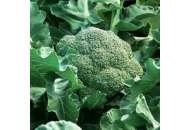 Румба F1 - капуста брокколи,  2500 семян, Clause (Клоз), Франция фото, цена