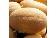 Мазин F1 (Маф 35) - дыня, 5 000 семян, Clause (Клоз), Франция фото, цена