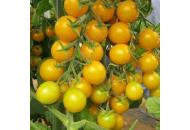 Голдвин F1 - томат черри индетерминантный, 250 семян, Clause Франция фото, цена