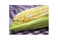 Камберленд F1 - кукуруза сахарная, 5000с , Clause Франция фото, цена