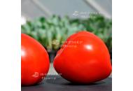 Супернова F1 (Каста) - томат детерминантный, 5 000, Clause Франция фото, цена