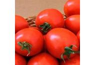 Апгрейд F1 - томат детерминантный, Esasem Италия фото, цена