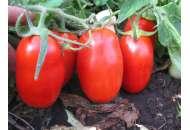 Глэдис F1 - томат детерминантный, 1000 семян, Esasem Италия фото, цена