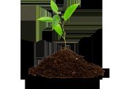 Cтимуляторы и регуляторы роста растений фото, цена