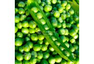 Альфа - горох, 10 гр., ООО Агрофирма-Элитсортсемена, Украина фото, цена