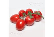 KS 3819 F1 - томат индетерминантный, Kitano (Япония) фото, цена