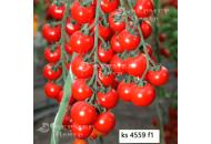 КС 4559 F1 -  черри томат индетерминантный, Kitano / Япония фото, цена