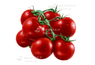 КС 959 F1 -  черри томат индетерминантный, Kitano / Япония фото, цена