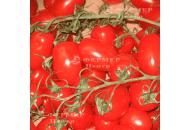КС 910 F1 -  черри томат детерминантный, Kitano / Япония фото, цена