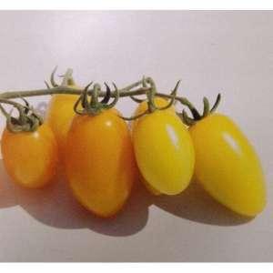 https://fermercenter.com/image/cache/data/KITANO/foto-tomat-determinantnyy-ks-3670-f1-kitano-fermercentr-300x300.jpg