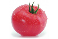 Китару (КС 14) F1 - томат индетерминантный, KITANO фото, цена