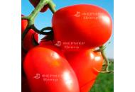 3402 F1 - томат детерминантный, 100 000 семян, (Lark Seeds) фото, цена