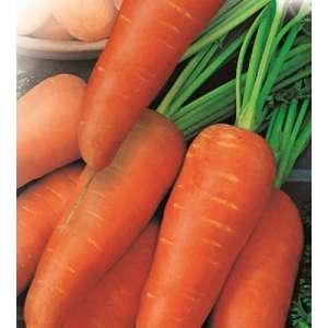 Шантене - морковь, Наско фото, цена
