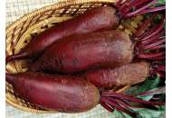 Торпедо - свекла столовая, 1000 семян, Nasko Украина фото, цена