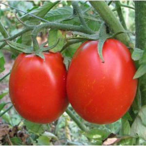 6416 F1 – томат, 1 000 семян, Nunhems (Нунемс) Голландия фото, цена