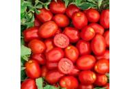 Кендрас F1 – томат, 1 000 семян, Nunhems (Нунемс) Голландия фото, цена