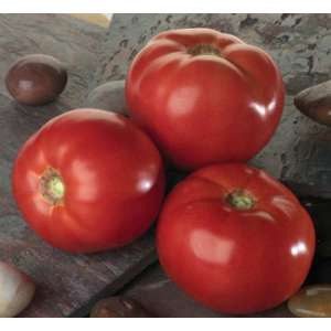 Белла Росса F1 - томат детерминантный, 1000 семян, Sakata (Саката), Япония фото, цена