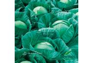 Вестри F1 - капуста белокочанная, 2 500 семян, Seminis (Семинис) Голландия фото, цена