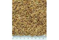 Суданка - суданская трава, весовая фото, цена