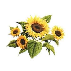 Босфора  - подсолнечник, 150 000 семян, Syngenta (Сингента), Голландия фото, цена