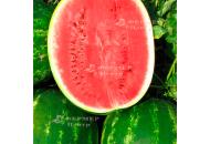 Топ Ган F1 - арбуз, 1000 семян, Syngenta (Сингента), Голландия фото, цена
