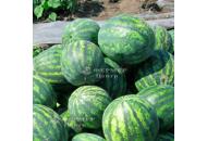 Соренто F1 - арбуз, 1000 семян, Syngenta (Сингента), Голландия фото, цена