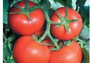 Фантастіна F1 - томат індетермінантний, 500 насіння, Syngenta (Сингента), Голландія фото, цiна
