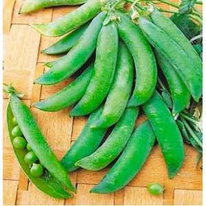 Бинго - горох овощной, весовой, Syngenta (Сингента), Голландия фото, цена
