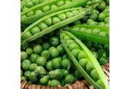 Преладо - горох овочевий, Syngenta (Сингента), Голландія фото, цiна