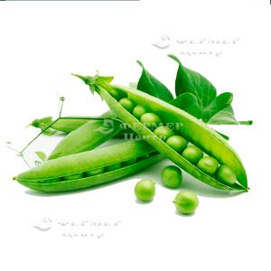 Преладо - горох овощной, Syngenta (Сингента), Голландия фото №3, цена