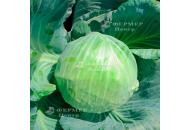 Блоктор F1 -  капуста белокочанная, 2 500 семян, Syngenta (Сингента), Голландия фото, цена