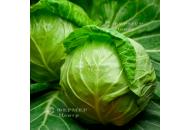 Джетодор F1 - капуста белокочанная, 2500 семян, Syngenta фото, цена