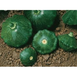 Старшип F1 - патиссон зеленый, 500 семян, Syngenta (Сингента), Голландия фото, цена