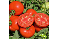 Терра Кота F1 - томат детерминантный 1000 семян, Syngenta фото, цена