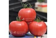 Афен F1 - томат индетерминантный, Tezier (Тезиер) Франция фото, цена